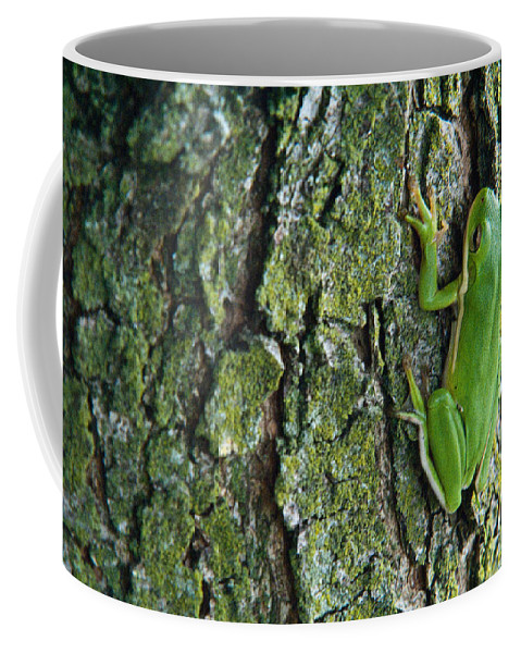 Cumberand Coffee Mug featuring the photograph Green Tree Frog On Lichen Covered Bark by Douglas Barnett