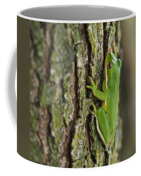 Green Coffee Mug featuring the photograph Green Tree Frog Thinking by Douglas Barnett