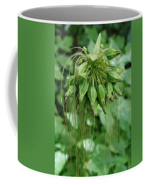 Macro Coffee Mug featuring the photograph Green Vines by Rob Hans