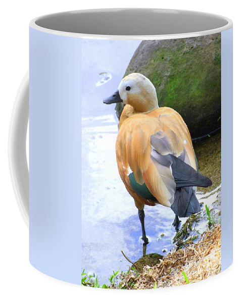 Brown Coffee Mug featuring the photograph Green Winged Wood Duck 1 by Mary Deal