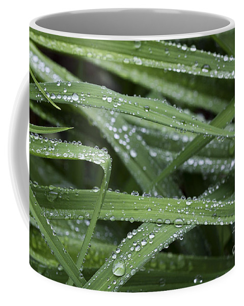 Nature Coffee Mug featuring the photograph Green With Rain Drops by Deborah Benoit