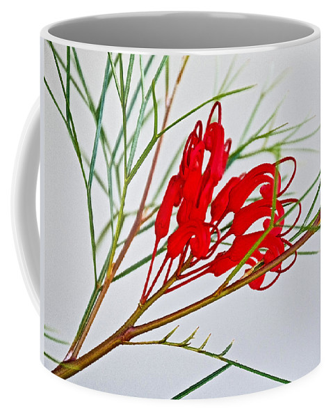 Grevilliea At Pilgrim Place In Claremont Coffee Mug featuring the photograph Grevilliea At Pilgrim Place In Claremont-california  by Ruth Hager