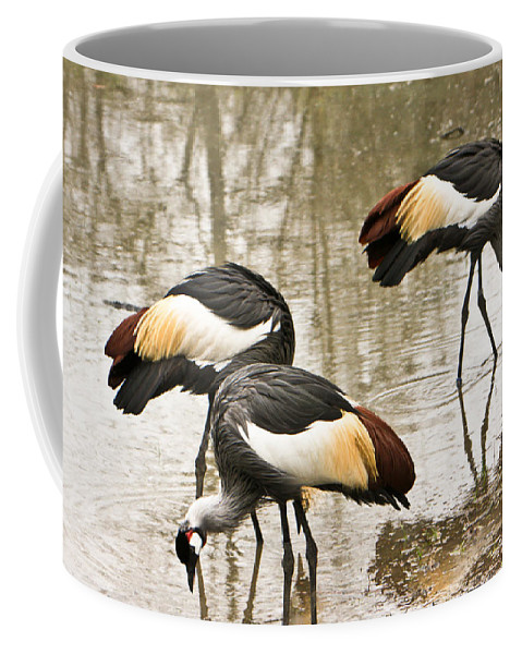 Grey Coffee Mug featuring the photograph Grey Crowned Crain Of Africa 5 by Douglas Barnett