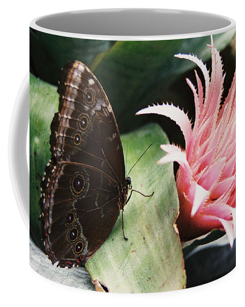 Butterfly Coffee Mug featuring the photograph Grey Pansy Pink Bromeliad by Ric Bascobert