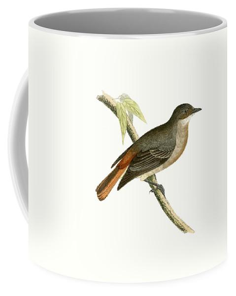 Bird Coffee Mug featuring the painting Grey Redstart by English School