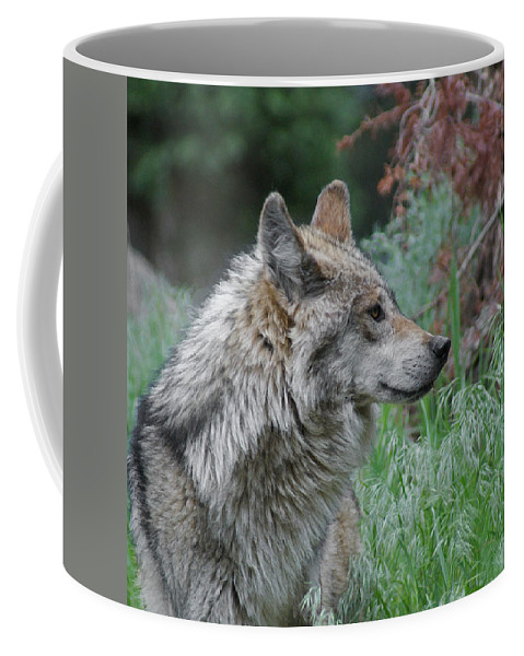 Wolf Coffee Mug featuring the mixed media Grey Wolf Profile 2 by Ernie Echols