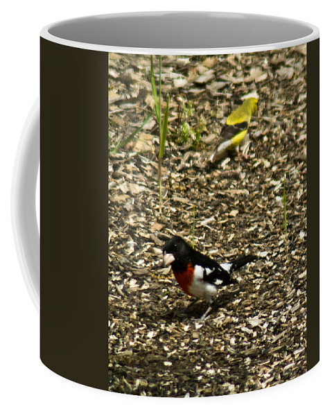 Rose Coffee Mug featuring the photograph Grosbeak With Quizzical Look by Douglas Barnett