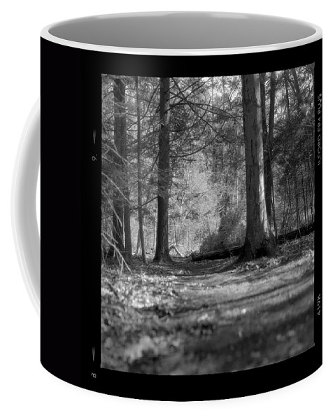 Trees Coffee Mug featuring the photograph Ground Floor by Jean Macaluso