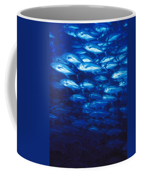 Costa Rica Coffee Mug featuring the photograph Group Of Bigeye Jacks Swimming By by James Forte