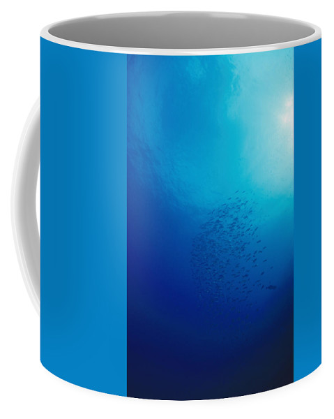 Solomon Islands Coffee Mug featuring the photograph Group Of Fish With Sunburst by James Forte