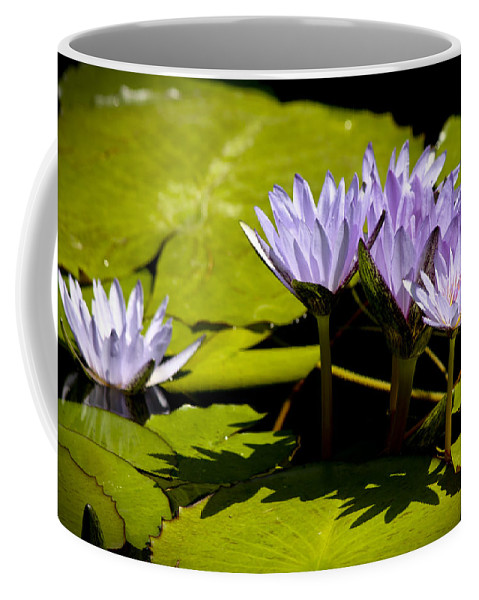 Purple Coffee Mug featuring the photograph Group Of Lavender Lillies by Teresa Mucha