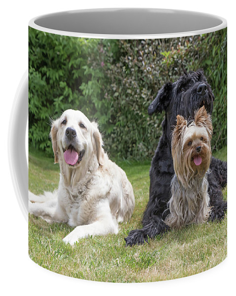 Pet Coffee Mug featuring the photograph Group Of Three Dogs by Jaroslav Frank