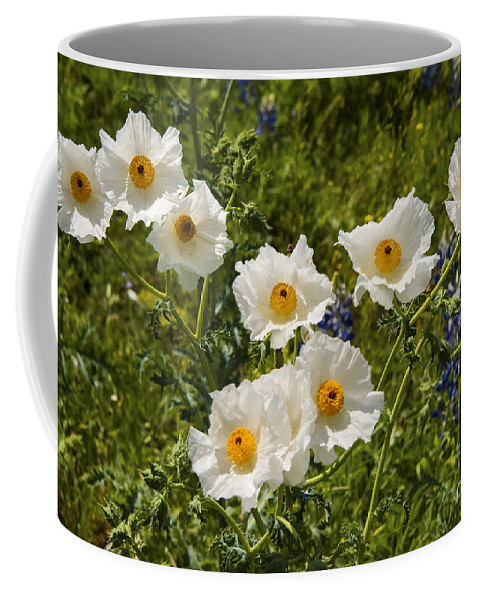 Fredericksburg Texas White Poppy Poppies Bloom Blooms Flower Flowers Spring Bud Buds Hill Country Coffee Mug featuring the photograph Groupies by Bob Phillips