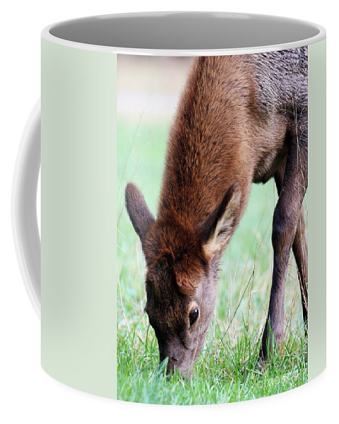 Elk Calf Coffee Mug featuring the photograph Growing Fast by Jennifer Robin