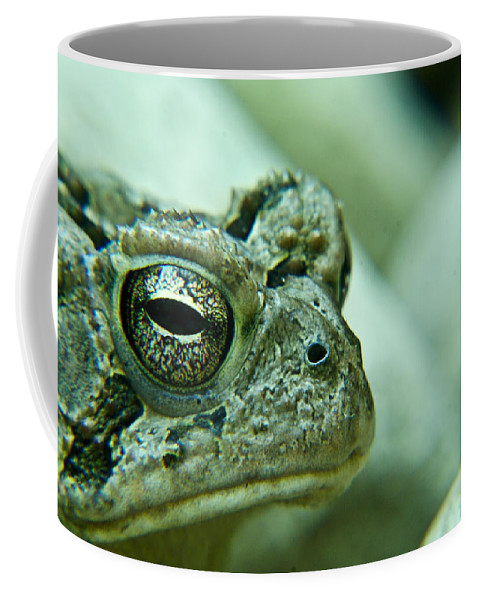 Toad Coffee Mug featuring the photograph Grumpy Toad by Douglas Barnett