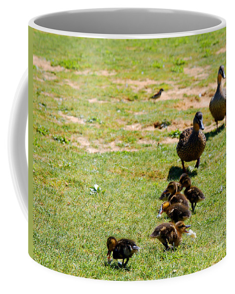 Clay Coffee Mug featuring the photograph Guarding The Family by Clayton Bruster