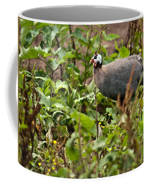 Galliformes Coffee Mug featuring the photograph Guineafowl 3 by Douglas Barnett