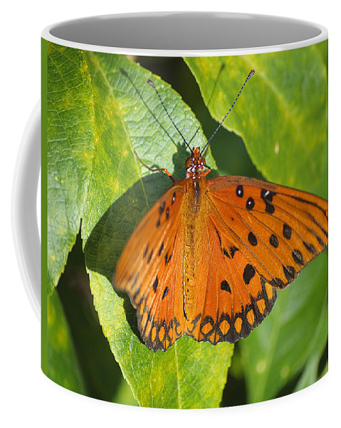 Butterfly Coffee Mug featuring the photograph Gulf Fritillary Butterfly by Kenneth Albin