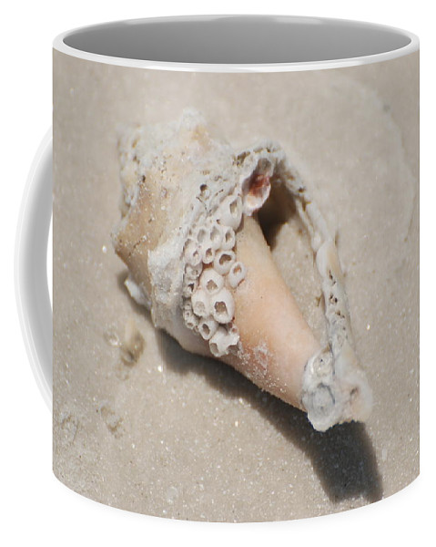 Nautical Coffee Mug featuring the photograph Gulf Of Mexico Shell by Rob Hans