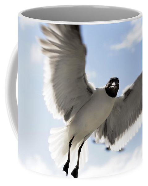 Seagull Coffee Mug featuring the photograph Gull In Flight by Marilyn Hunt