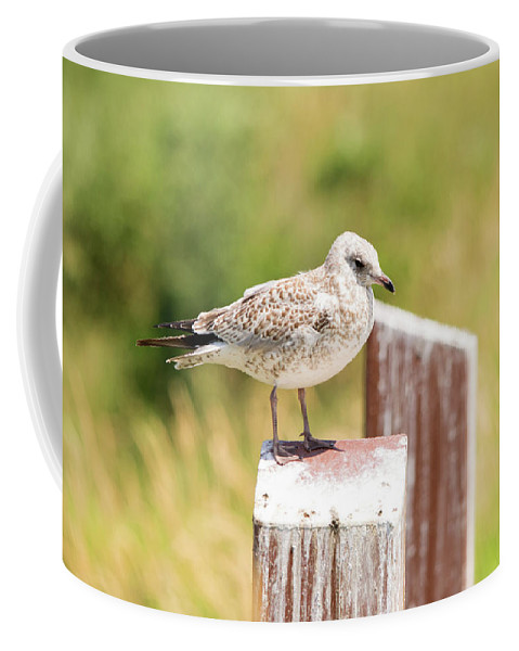 Sea Gull Coffee Mug featuring the photograph Gull On A Post by Linda Kerkau