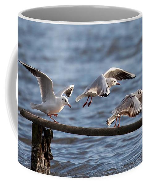 Gulls Coffee Mug featuring the photograph Gulls by Bob Kemp