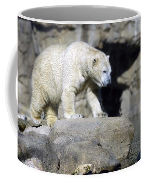 Memphis Zoo Coffee Mug featuring the photograph Habitat - Memphis Zoo by D'Arcy Evans