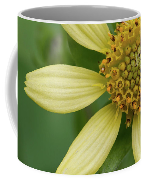 Smallanthus Uvedalia Coffee Mug featuring the photograph Hairy Leafcup #2 by Paul Rebmann