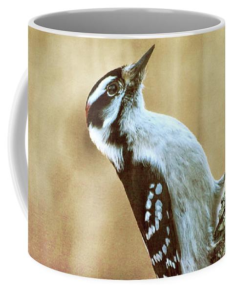 Hairy Woodpecker Coffee Mug featuring the photograph Hairy Woodpecker by Bob Orsillo