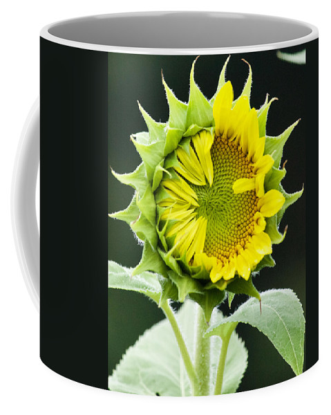 Flower Coffee Mug featuring the photograph Halfway There by Tiffany Erdman
