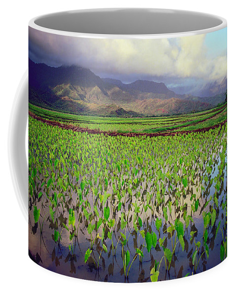 Kauai Coffee Mug featuring the photograph Hanalei Valley Taro Ponds by Kevin Smith