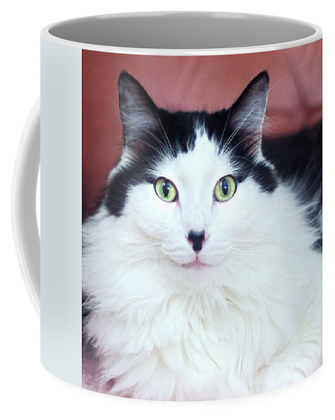 Cat Coffee Mug featuring the photograph Handsome Tuxy by Byron Varvarigos