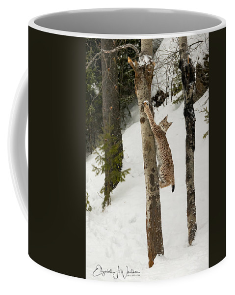 Siberian Lynx Coffee Mug featuring the photograph Hang In There by Elizabeth Waitinas