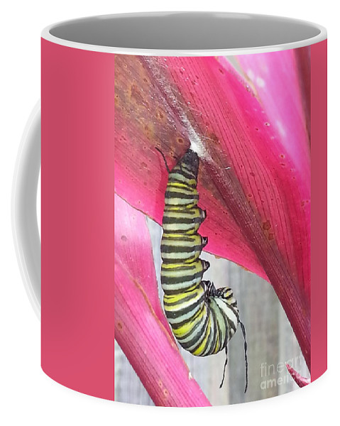 Caterpillar Coffee Mug featuring the photograph Hang by Michelle S White