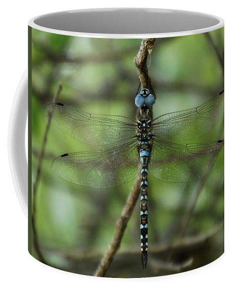 Dragon Coffee Mug featuring the photograph Hang Out by Donna Blackhall