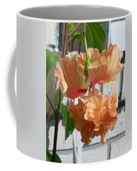 Orange Coffee Mug featuring the photograph Hanging Hibiscus by Laurette Escobar