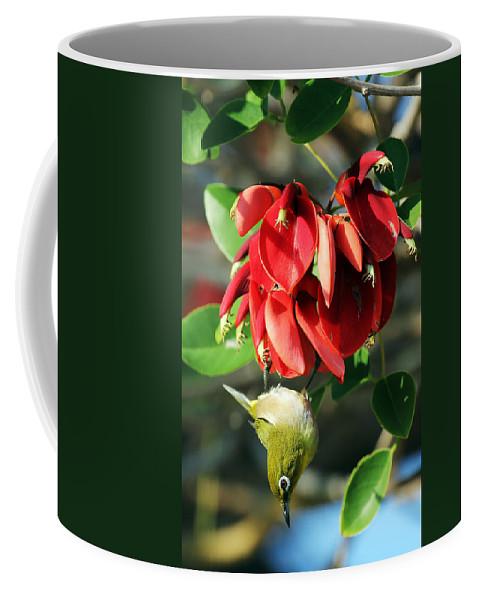 Hanging Japanese Coffee Mug featuring the photograph Hanging Japanese by Jennifer Robin
