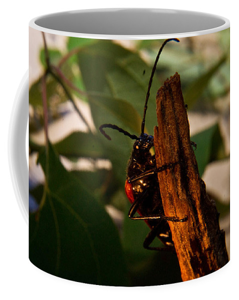 Beetle Coffee Mug featuring the photograph Hanging On For Life by Douglas Barnett