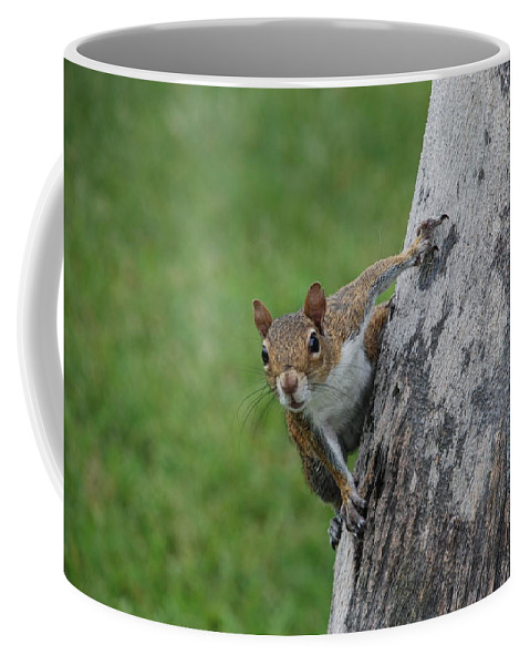 Squirrel Coffee Mug featuring the photograph Hanging On by Rob Hans