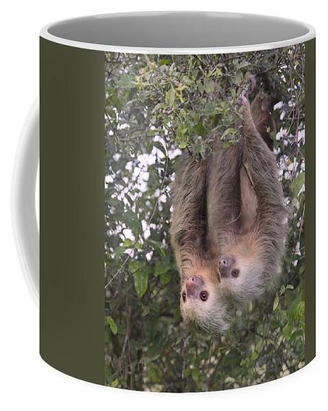Two Coffee Mug featuring the photograph Hanging Out by Betsy Knapp