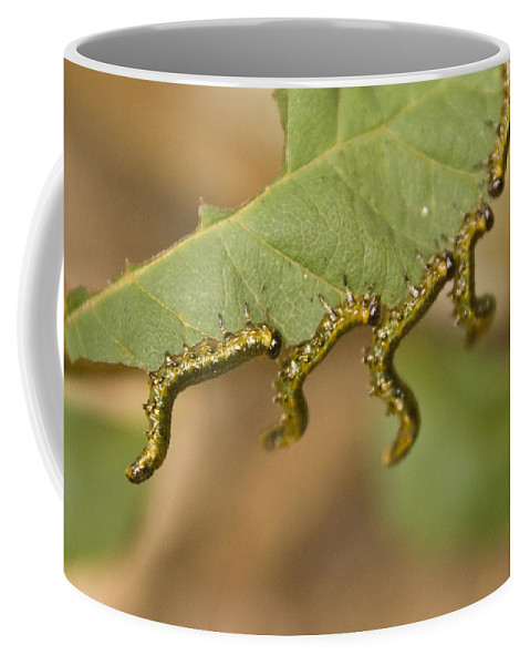 Larvae Coffee Mug featuring the photograph Hanging There by Douglas Barnett