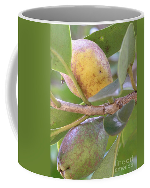 Green Coffee Mug featuring the photograph Haole Guava by Mary Deal