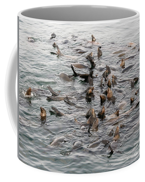 Coffee Mug featuring the photograph Happy Harbour Seals by Carol Groenen