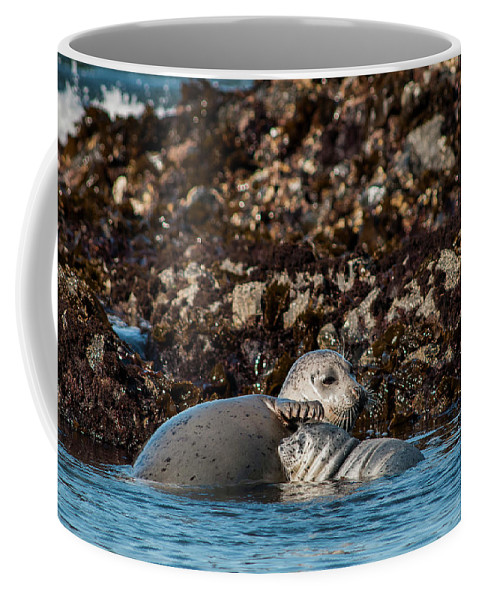 Animals Coffee Mug featuring the photograph Harbor Seal And Pup by Robert Potts