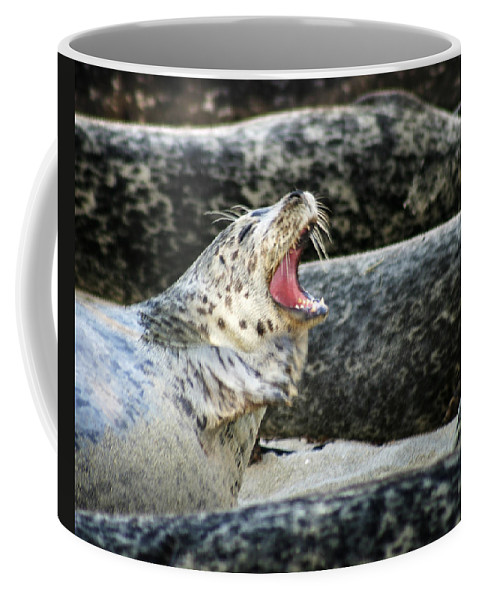 Harbor Seal Coffee Mug featuring the photograph Harbor Seal by Anthony Jones