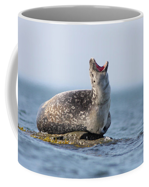 Harbour Coffee Mug featuring the photograph Harbour Seal by Mircea Costina Photography