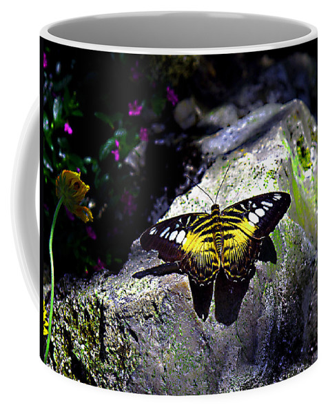 Clipper Butterfly Coffee Mug featuring the photograph Hard Landing--clipper Butterfly by Bob Johnson