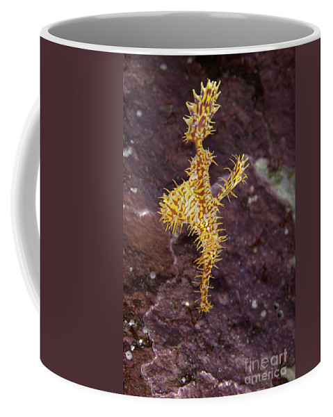 Ghost Pipefish Coffee Mug featuring the photograph Harlequin Ghost Pipefish - Solenostomus Paradoxus by Anthony Totah