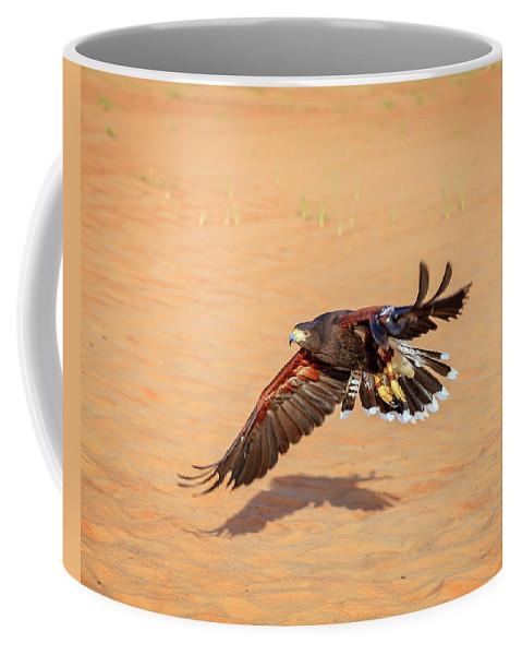Dubai Coffee Mug featuring the photograph Harris Hawk by Alexey Stiop