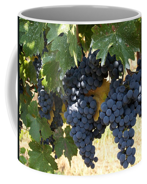 Grapes Coffee Mug featuring the photograph Harvest Time by Gale Cochran-Smith